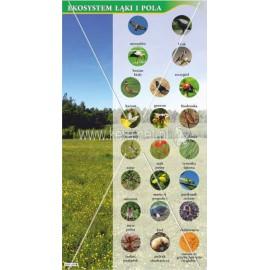 3042 Ekosystem łąki i pola